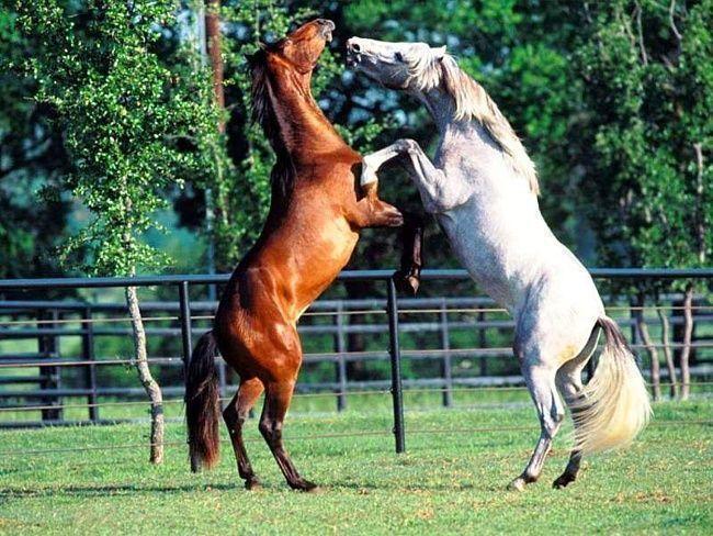 фото коней