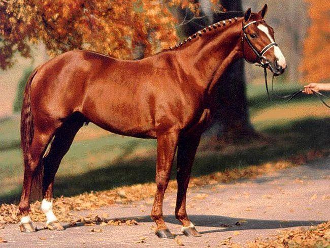 картинки лошадь