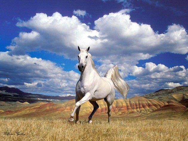 кони фото