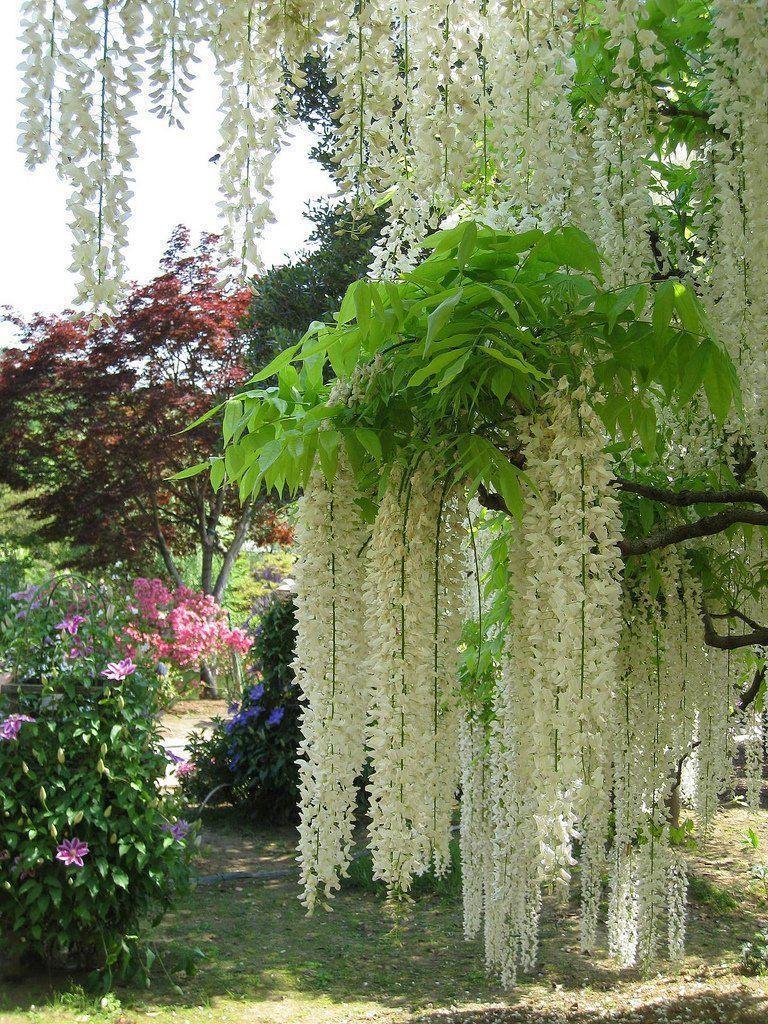 парк асикага цветущий