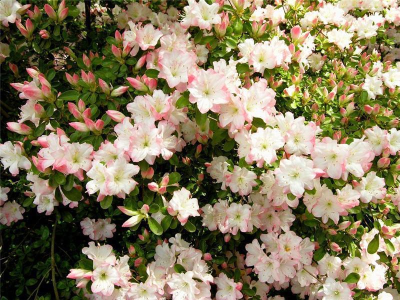 парк в японии цветы