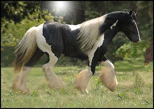 тяжеловоз конь фото