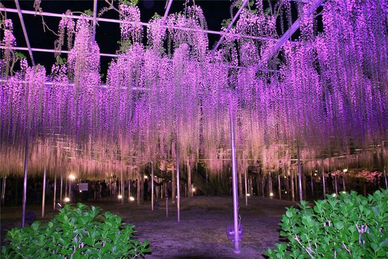 япония сад
