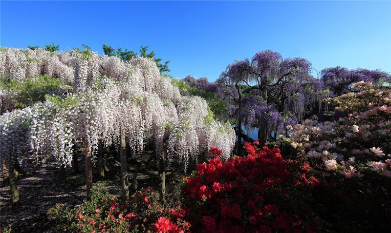 японский парк асикага
