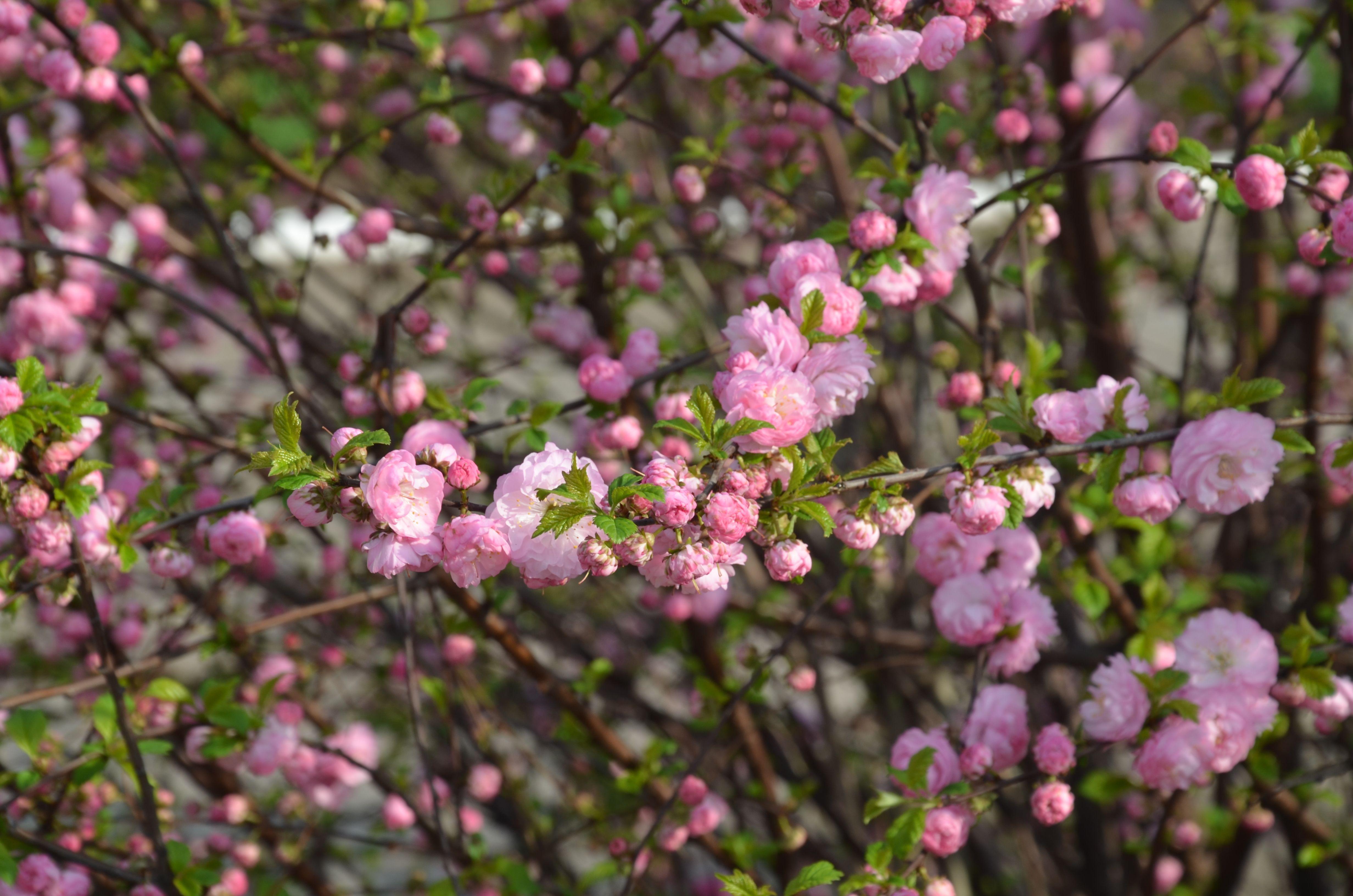 Весна в Марьинке