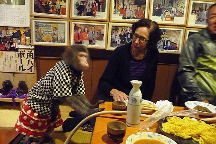 ресторан обезьянки