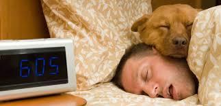 животные и сон