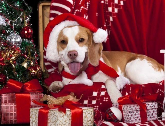 Новый год-2018: ТОП-лист запрещенных подарков в год Желтой Земляной Собаки