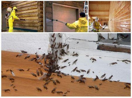 Какие существуют эффективные методы борьбы с муравьями в доме