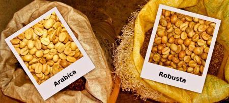 Робуста или Арабика: что купить