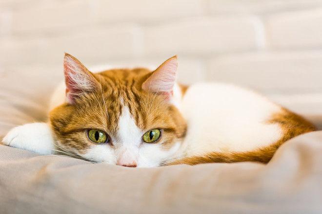 До слез: котик увидел погибшего хозяина на экране телефона