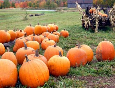 Природа говорит: народные приметы о погоде в октябре и народные приметы на Покров Пресвятой Богородицы