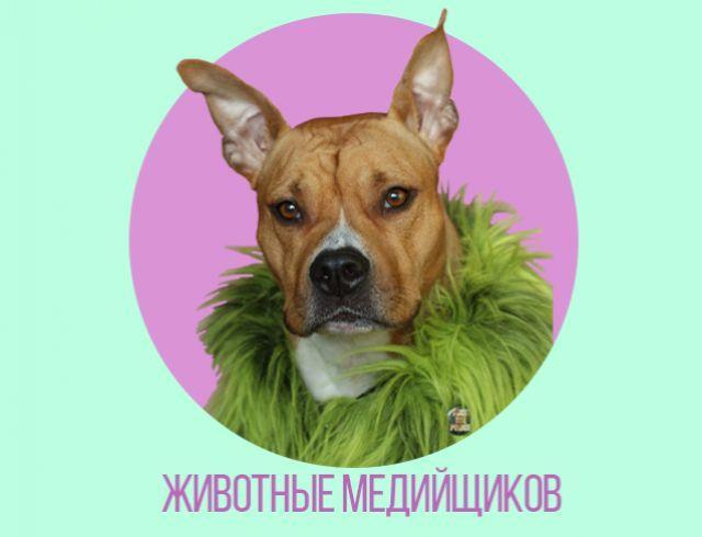 Медиа-тусовка о домашних животных