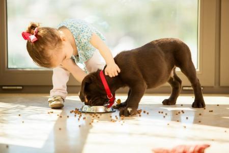 Лакомство для собаки